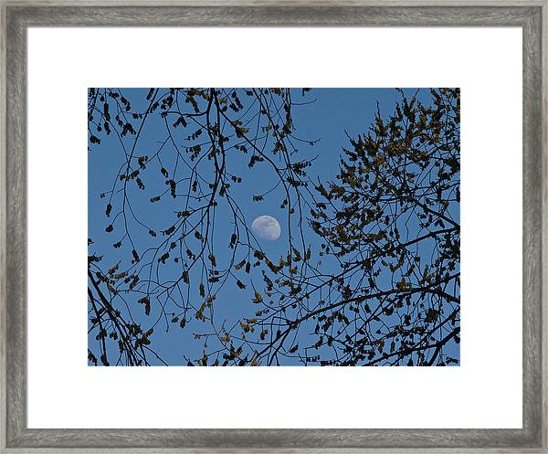 Moon And Trees 1 Framed Print