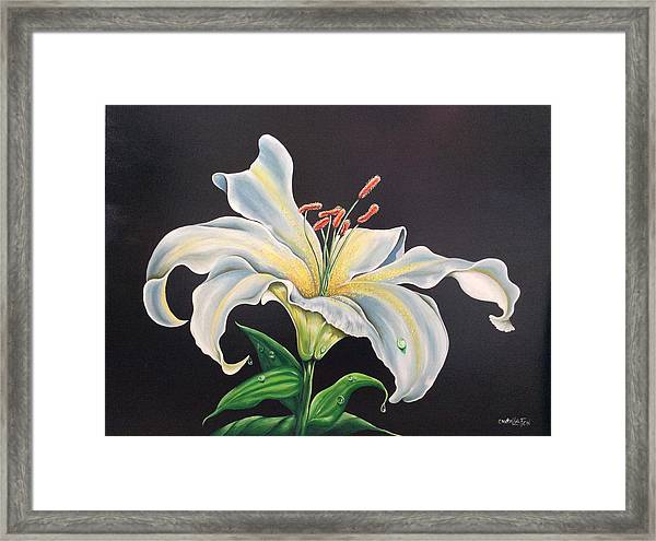 Moon Light Lilly Framed Print