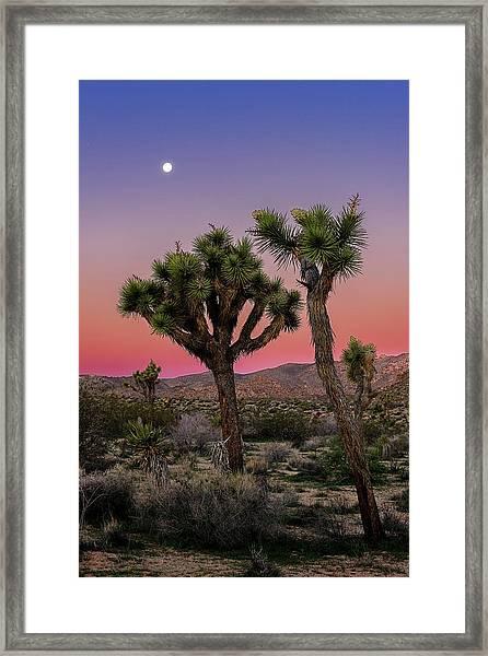 Moon Over Joshua Tree Framed Print