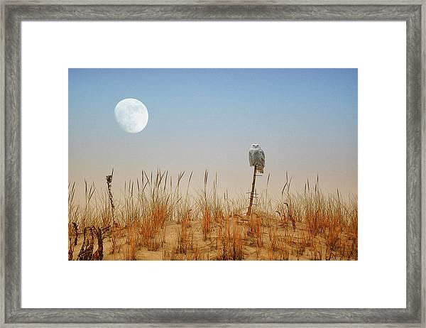 Moon Rise Snowy Owl Framed Print