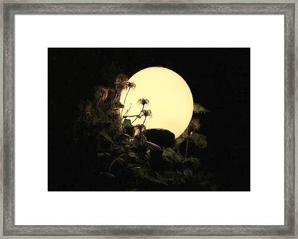 Moonglow Thistles Framed Print