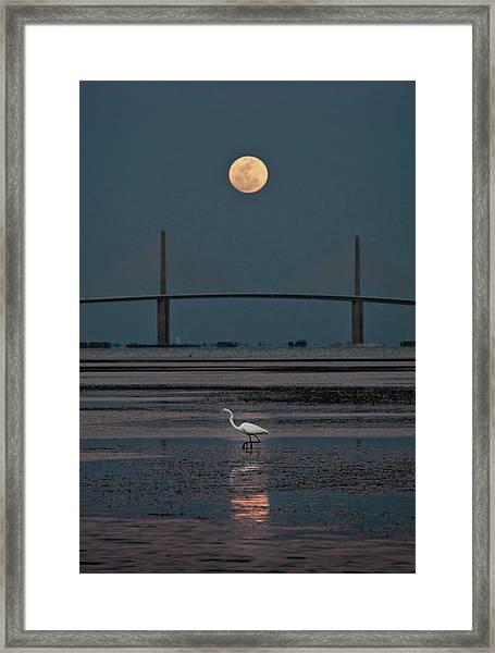 Moonlight Stroll Framed Print