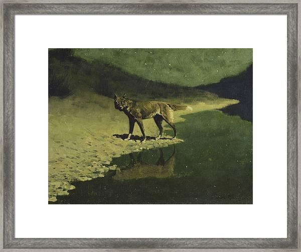 Moonlight, Wolf Framed Print