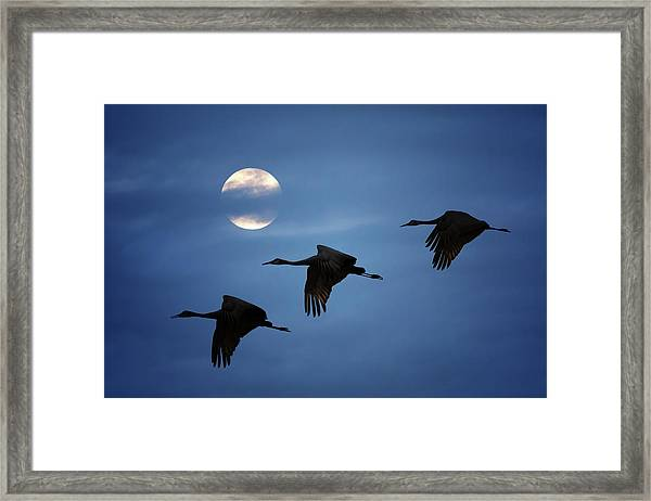 Moonlit Flight Framed Print