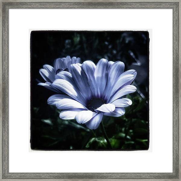 Framed Print featuring the photograph Moonlit Petals. From The Beautiful by Mr Photojimsf