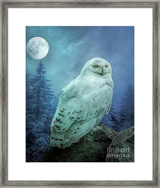 Moonlit Snowy Owl Framed Print