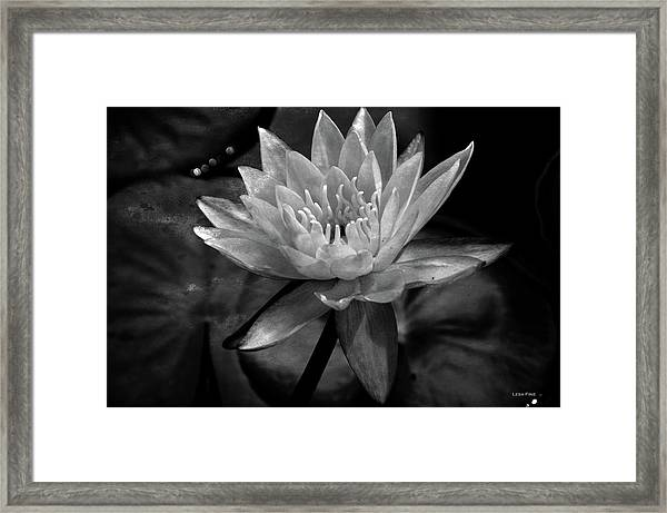 Moonlit Water Lily Bw Framed Print