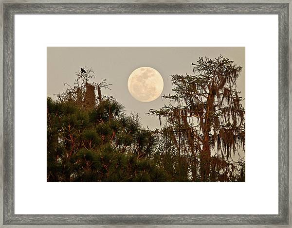 Moonrise Over Southern Pines Framed Print