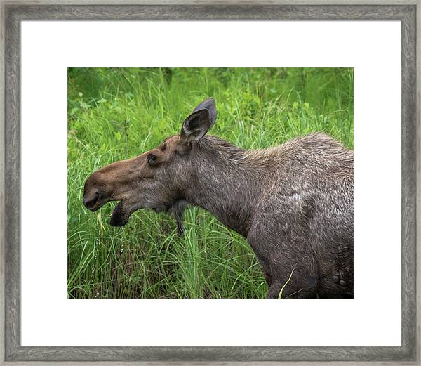 Moose Profile Framed Print