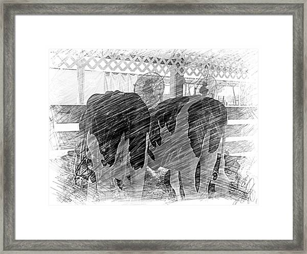 Moo...ving At The County Fair Framed Print