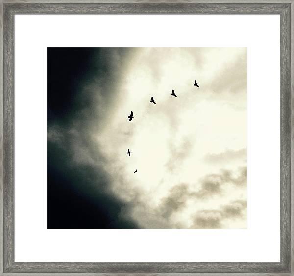 Big Sky Crows Framed Print