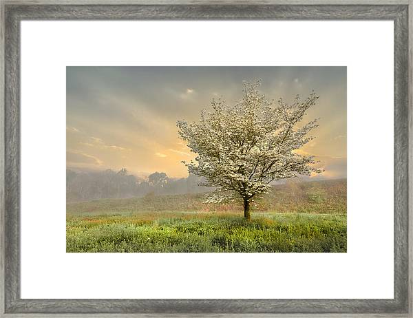 Morning Celebration Framed Print