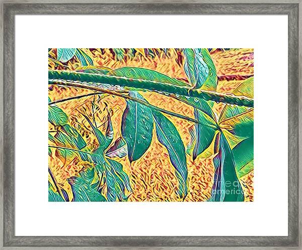Morning Dew Drops In Puna Framed Print