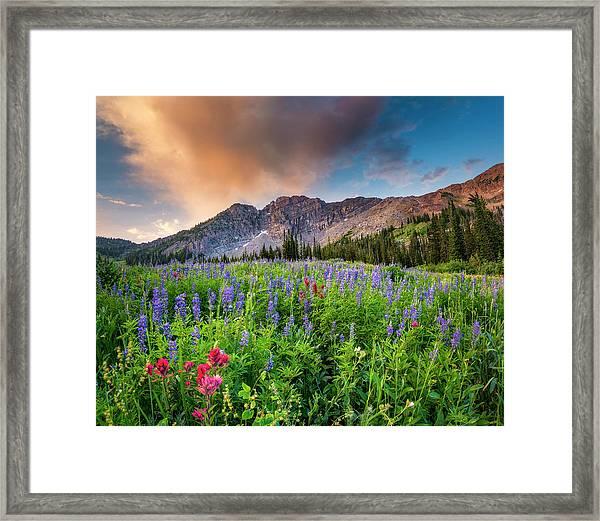 Morning Flowers In Little Cottonwood Canyon, Utah Framed Print