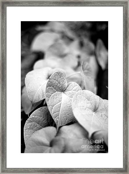 Morning Glory Vines Framed Print