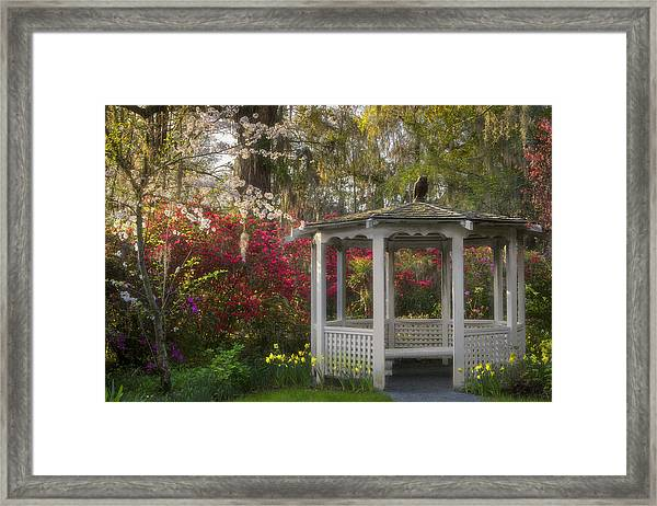 Morning Glow At The Plantations Framed Print