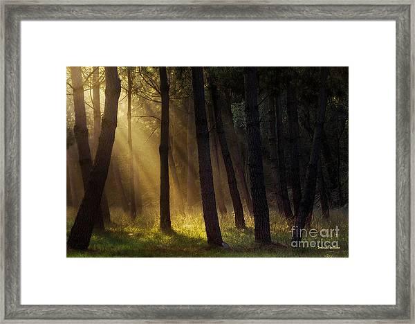 Morning Light In The Forest Framed Print