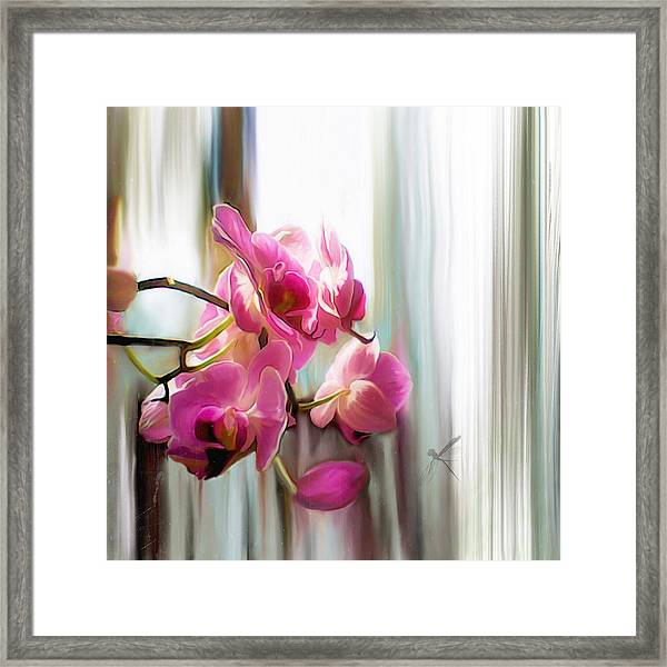 Morning Light Orchids Framed Print