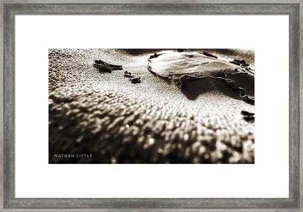 Morning Mushroom Top Framed Print
