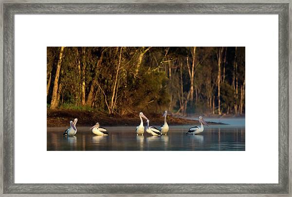 Morning On The River Framed Print