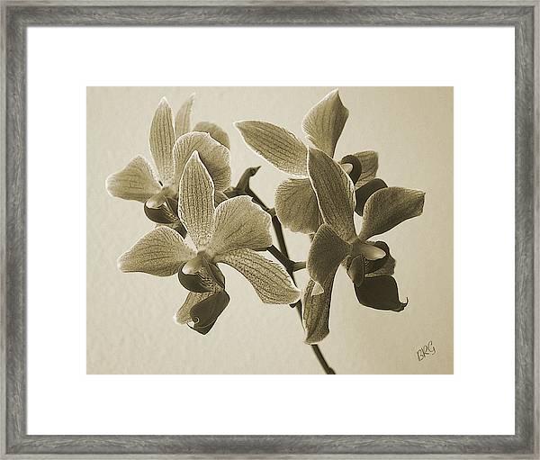 Morning Orchid Framed Print