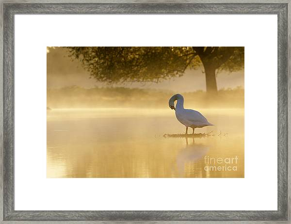 Morning Preen Framed Print