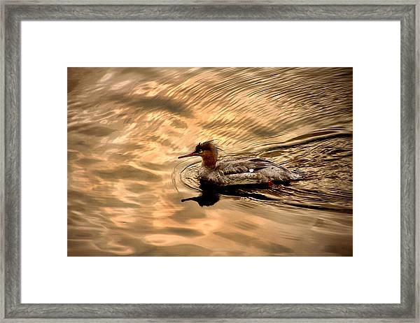 Morning Swim Framed Print