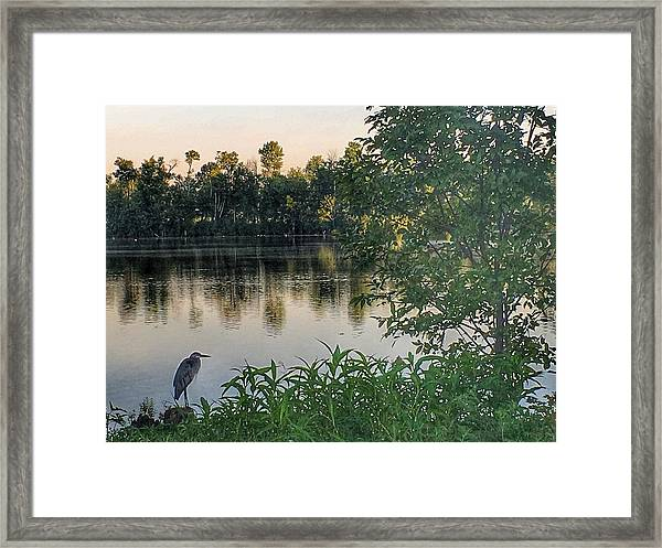 Morning Tranquility Framed Print