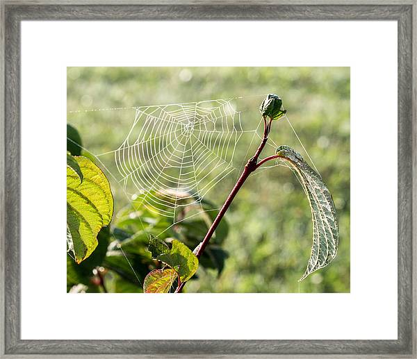 Morning Web #1 Framed Print