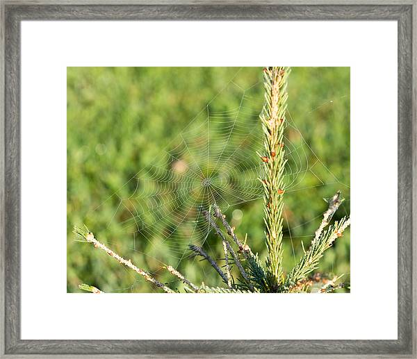 Morning Web #2 Framed Print