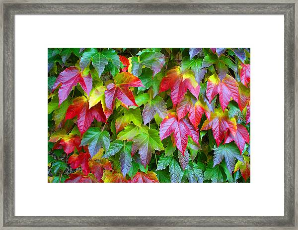 Moselle Valley Leaves Framed Print