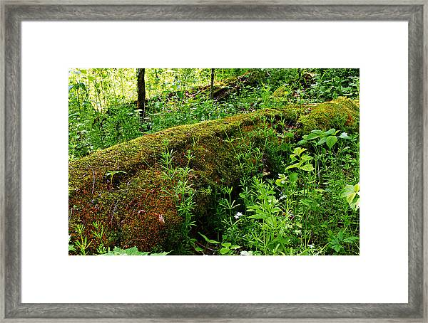 Moss Covered Log 2 Framed Print