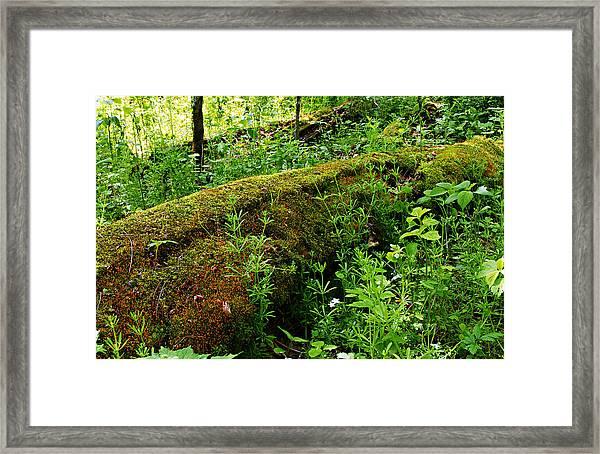 Moss Covered Log 2 Framed Print