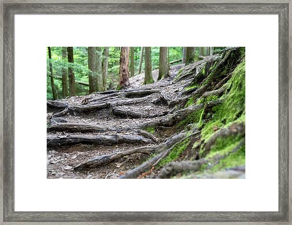 Moss Glen Falls - Vermont Framed Print