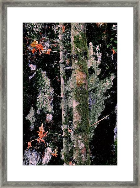 Moss Incognito Framed Print