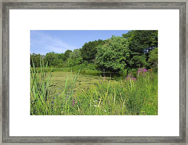 Mossy Pond Framed Print