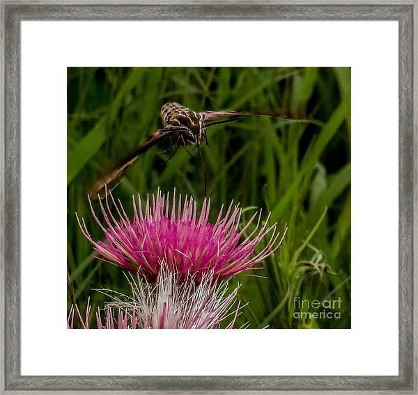 Moth 1 Framed Print