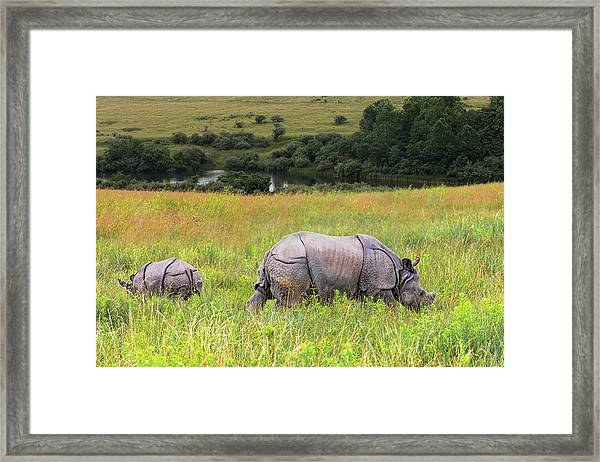 Mother And Baby Rhinos Framed Print