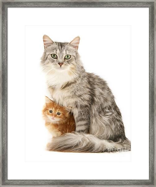 Mother Cat And Ginger Kitten Framed Print