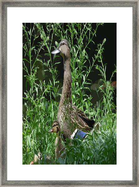 Mother Duck Dry Brush Framed Print