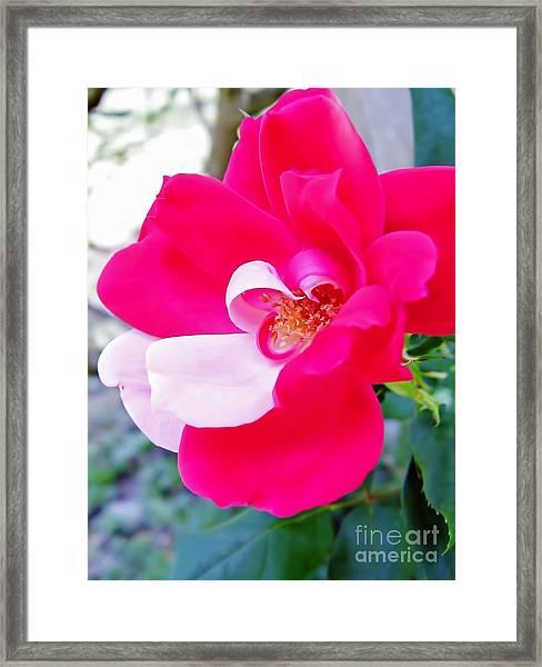 Mother - Natures - Best Framed Print