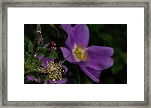 Mothers Day Framed Print