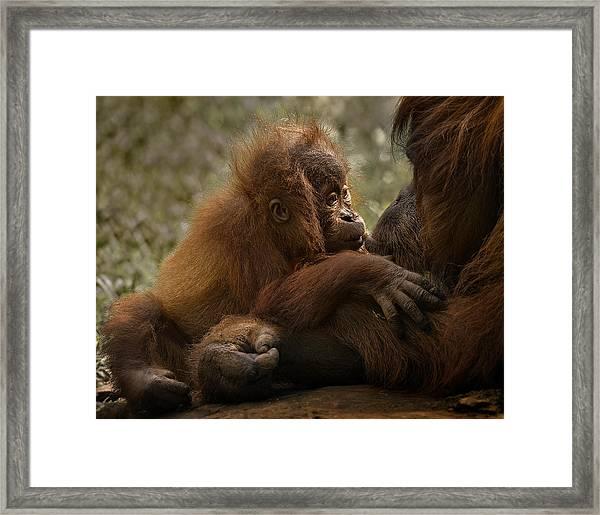 Mother's Love Framed Print