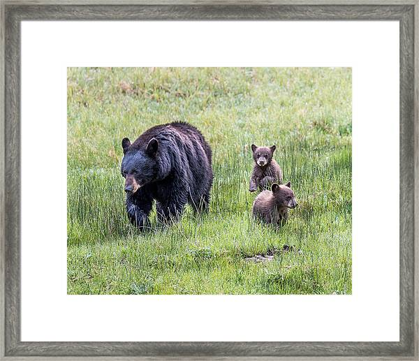 Mothers Love Framed Print by Robert Yone