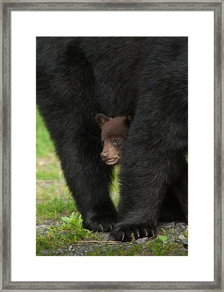 Mother's Shelter Framed Print