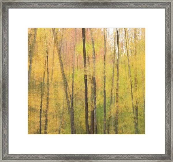 Motion In Color Framed Print