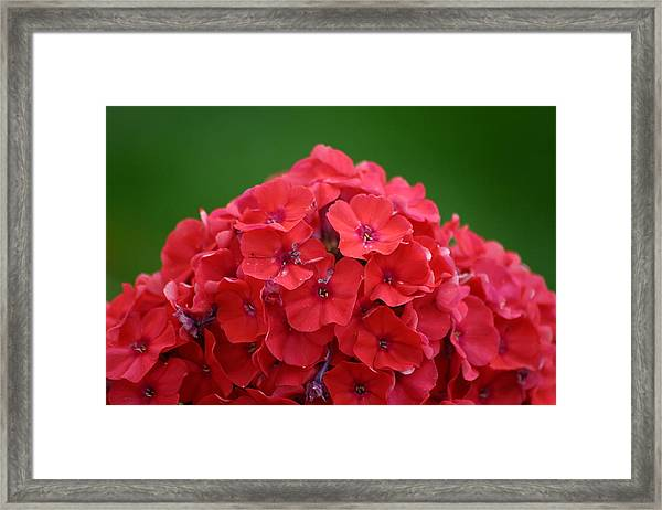 Mount Flower Framed Print by Dennis Curry