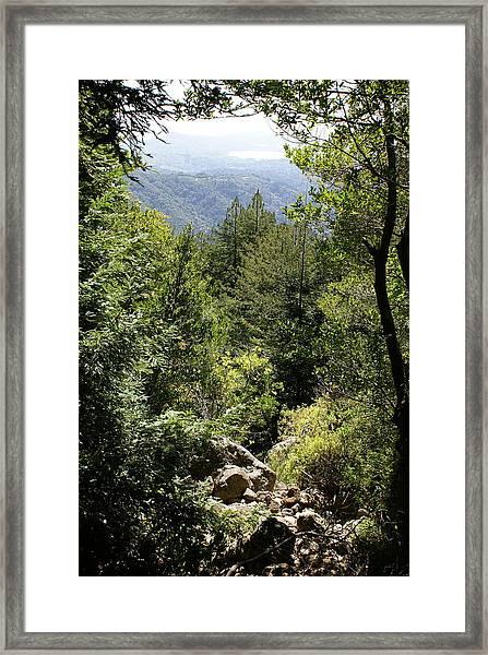 Mount Tamalpais Forest View Framed Print