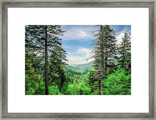 Mountain Forest Framed Print