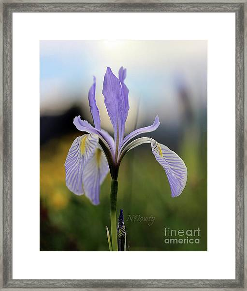Mountain Iris With Bud Framed Print